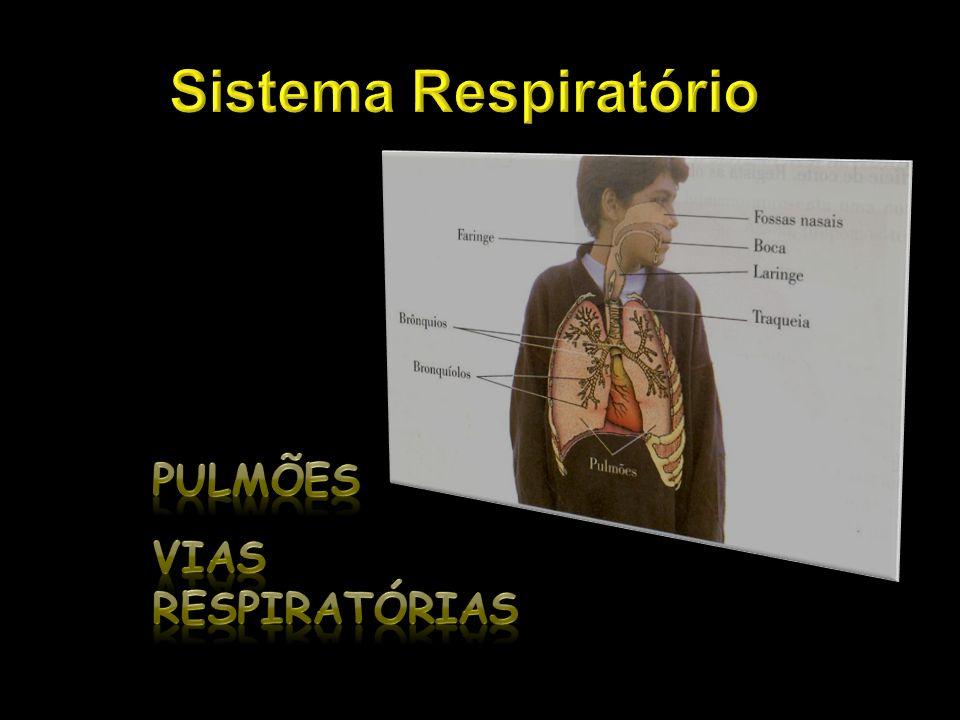 Sistema Respiratório Pulmões Vias respiratórias