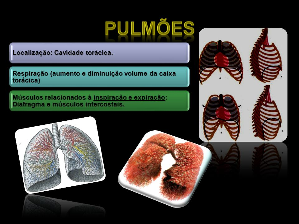 Pulmões Localização: Cavidade torácica. Respiração (aumento e diminuição volume da caixa torácica)