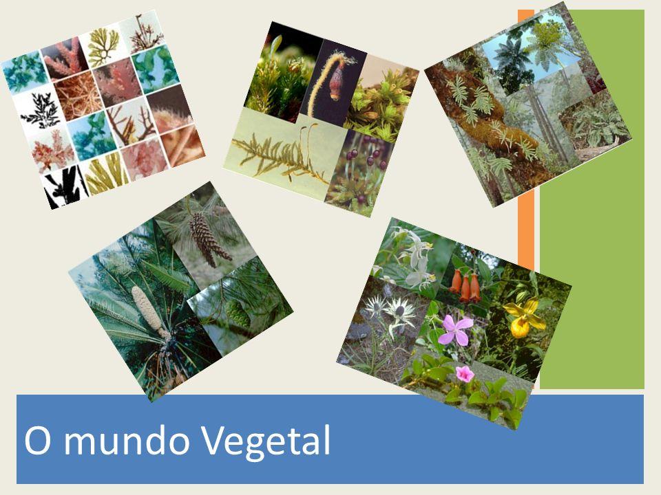 O mundo Vegetal