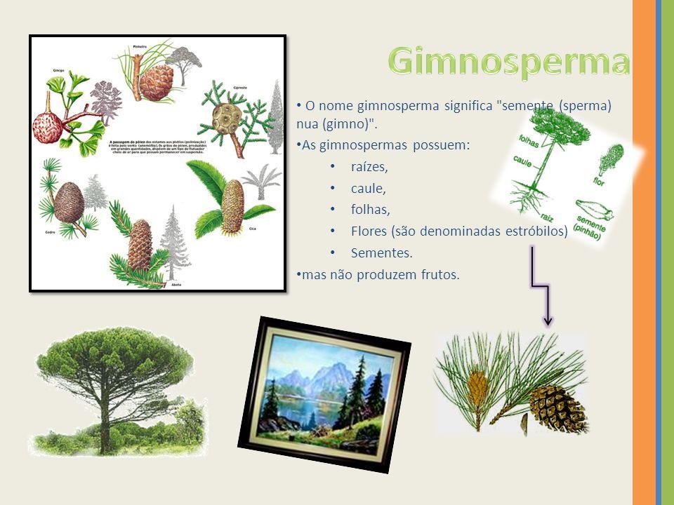 Gimnosperma O nome gimnosperma significa semente (sperma) nua (gimno) . As gimnospermas possuem: raízes,