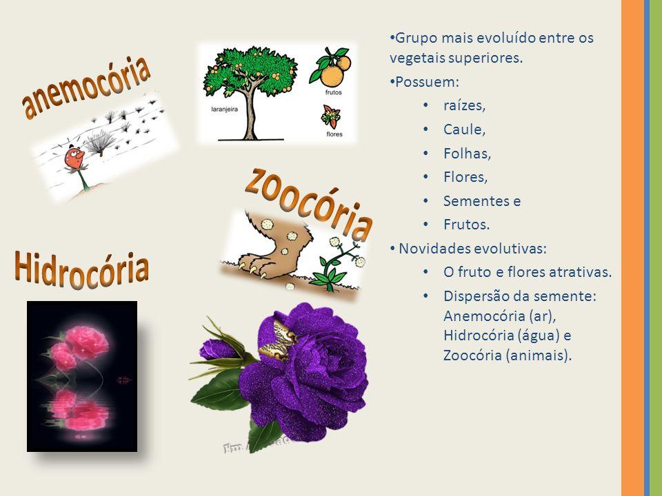 anemocória zoocória Hidrocória