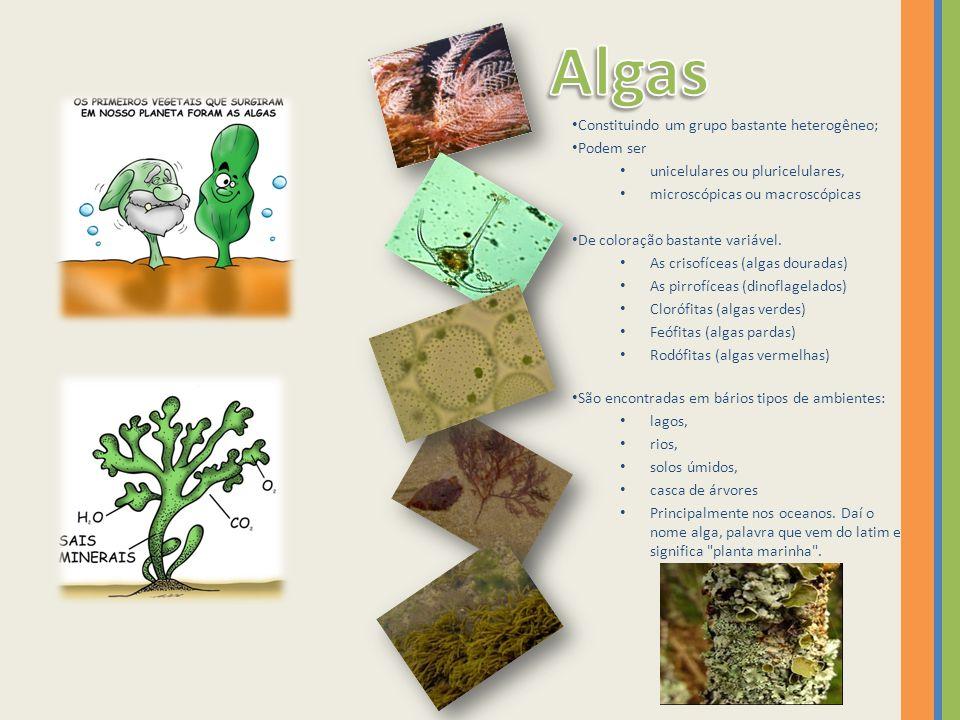 Algas Constituindo um grupo bastante heterogêneo; Podem ser