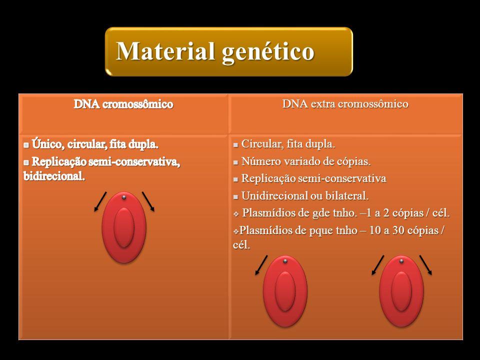 DNA extra cromossômico