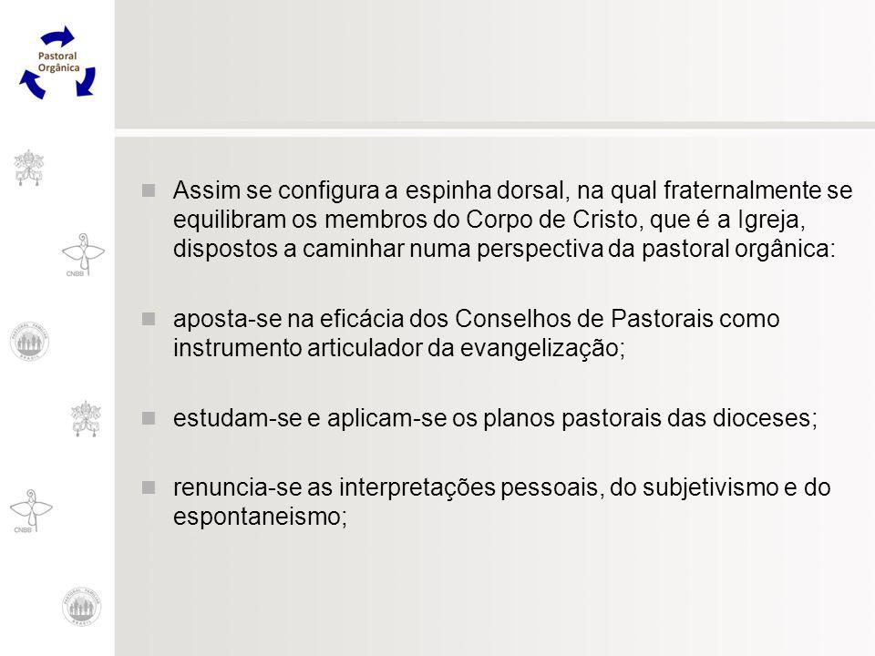 Assim se configura a espinha dorsal, na qual fraternalmente se equilibram os membros do Corpo de Cristo, que é a Igreja, dispostos a caminhar numa perspectiva da pastoral orgânica:
