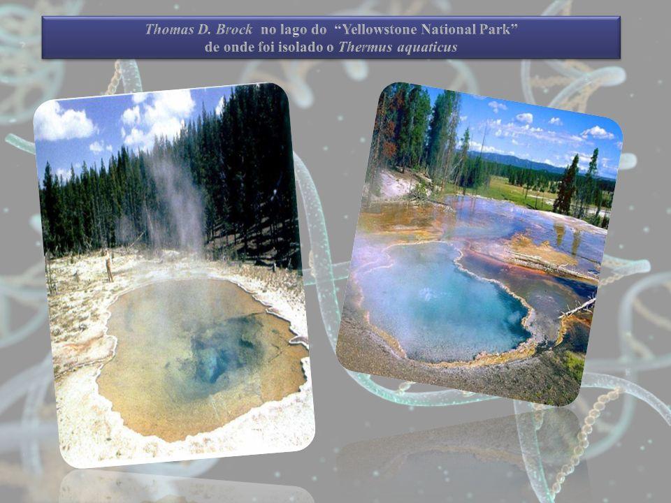 Thomas D. Brock no lago do Yellowstone National Park