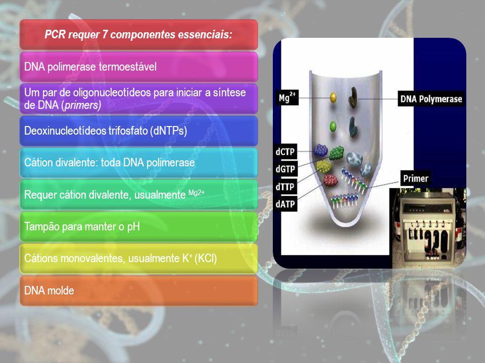 PCR requer 7 componentes essenciais: