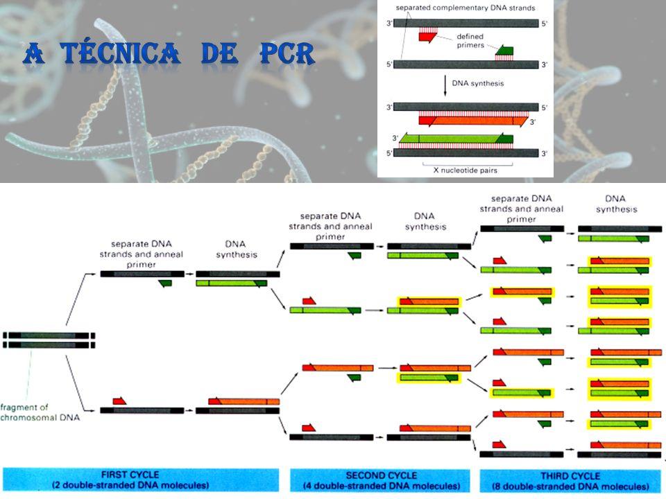 A TÉCNICA DE PCR
