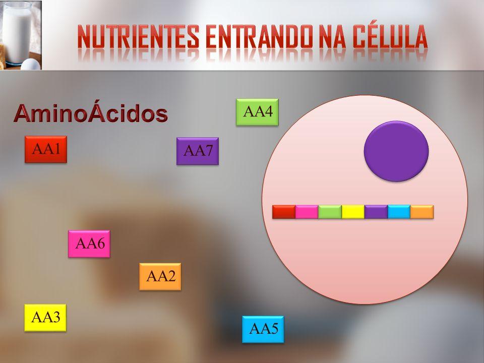 Nutrientes entrando na célula