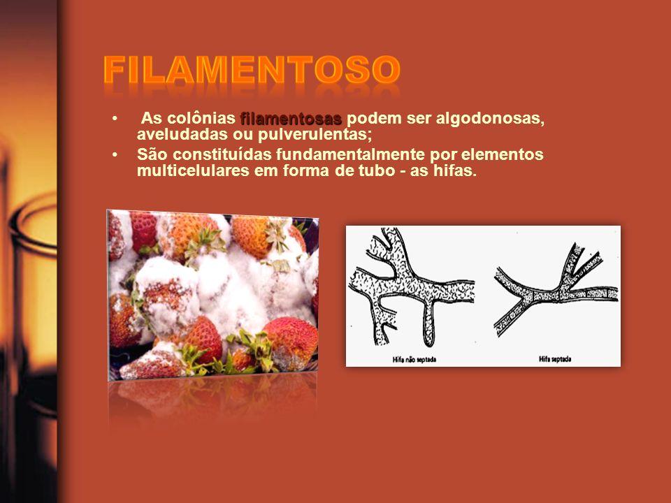 Filamentoso As colônias filamentosas podem ser algodonosas, aveludadas ou pulverulentas;