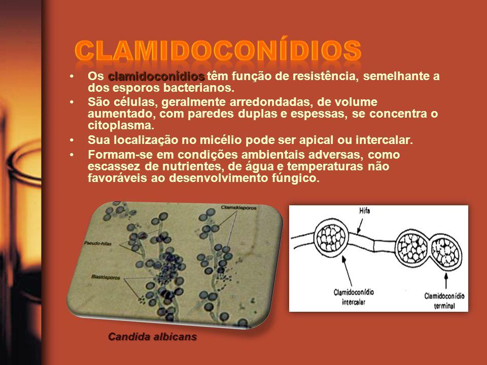 clamidoconídiosOs clamidoconídios têm função de resistência, semelhante a dos esporos bacterianos.
