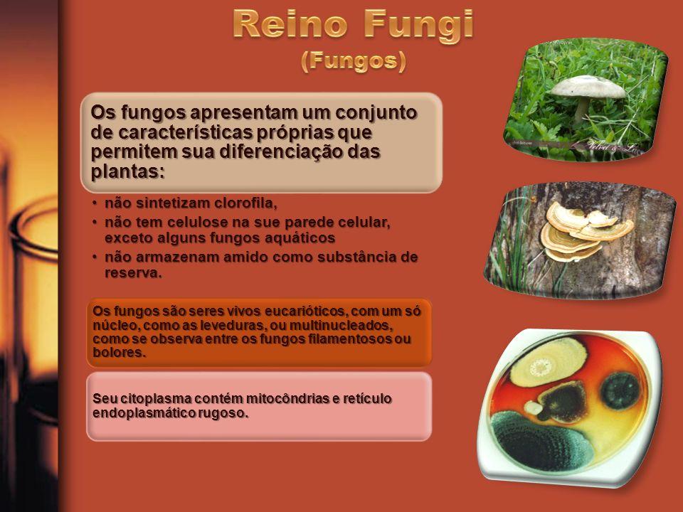 Reino Fungi (Fungos) Fabiana Carvalho Silva