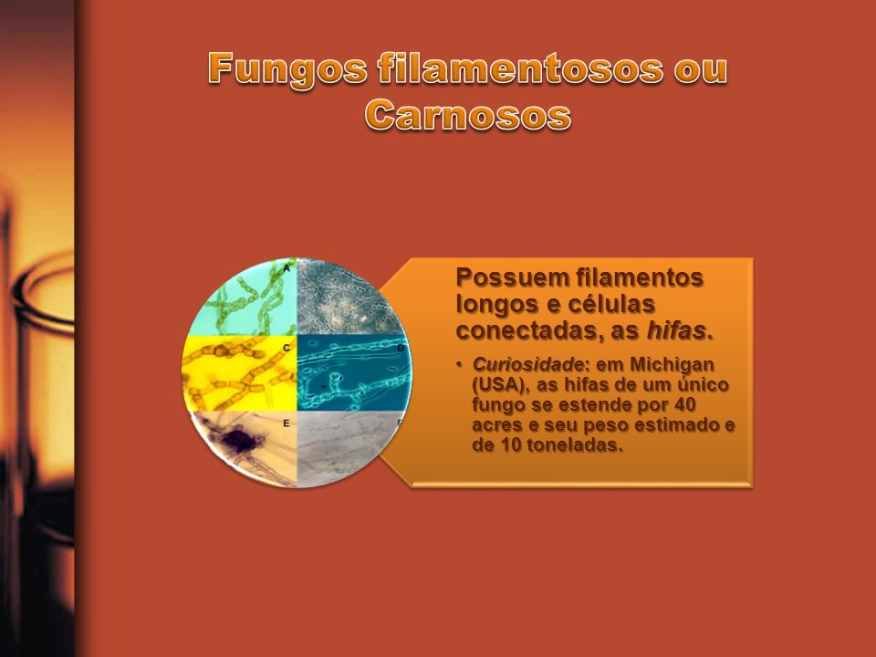 Fungos filamentosos ou Carnosos
