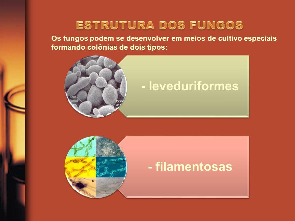 ESTRUTURA DOS FUNGOS Os fungos podem se desenvolver em meios de cultivo especiais formando colônias de dois tipos: