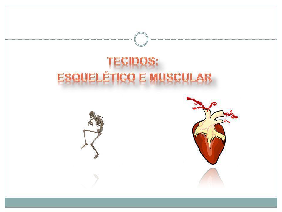 Tecidos: Esquelético e Muscular
