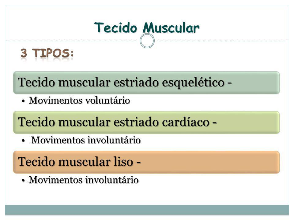 Tecido Muscular 3 Tipos: Tecido muscular estriado esquelético -