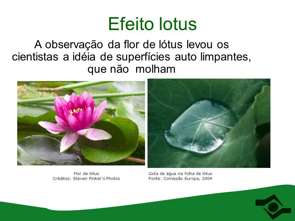 Efeito lotus A observação da flor de lótus levou os cientistas a idéia de superfícies auto limpantes, que não molham.