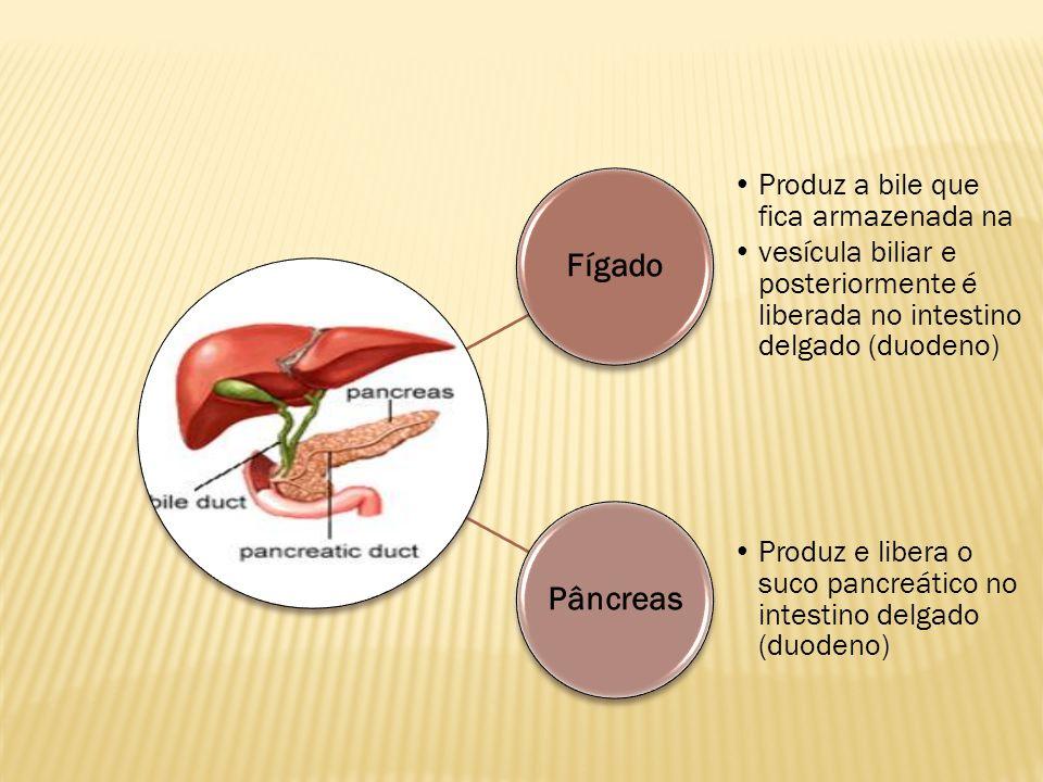 Fígado Produz a bile que fica armazenada na. vesícula biliar e posteriormente é liberada no intestino delgado (duodeno)