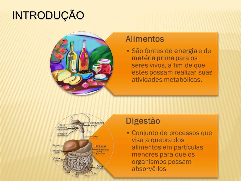 INTRODUÇÃO Alimentos. São fontes de energia e de matéria prima para os seres vivos, a fim de que estes possam realizar suas atividades metabólicas.