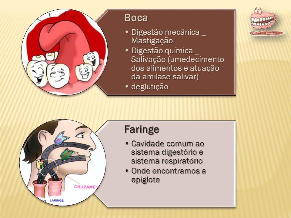 Boca Digestão mecânica _ Mastigação. Digestão química _ Salivação (umedecimento dos alimentos e atuação da amilase salivar)