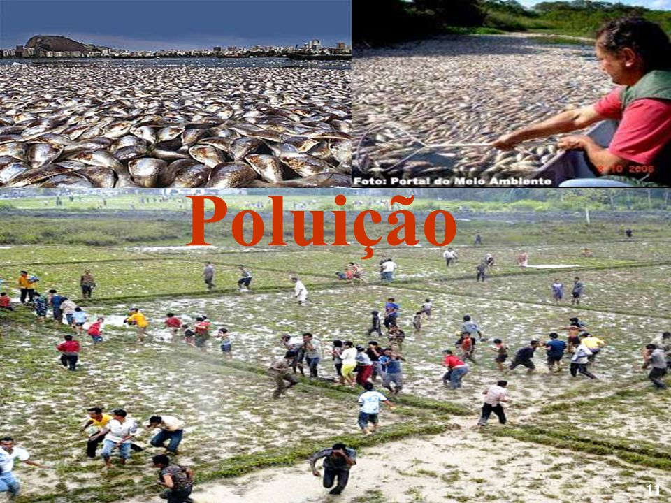 Poluição 11