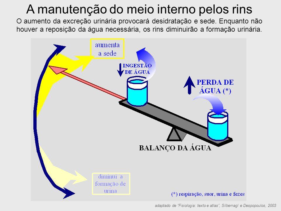 A manutenção do meio interno pelos rins