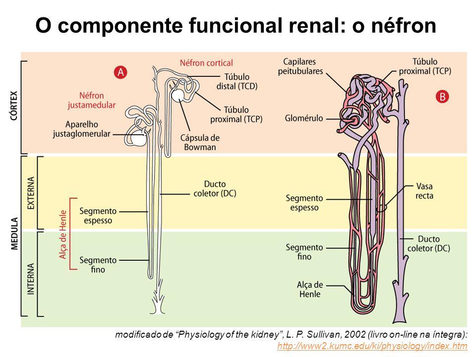O componente funcional renal: o néfron