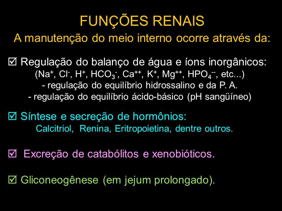 FUNÇÕES RENAIS A manutenção do meio interno ocorre através da: