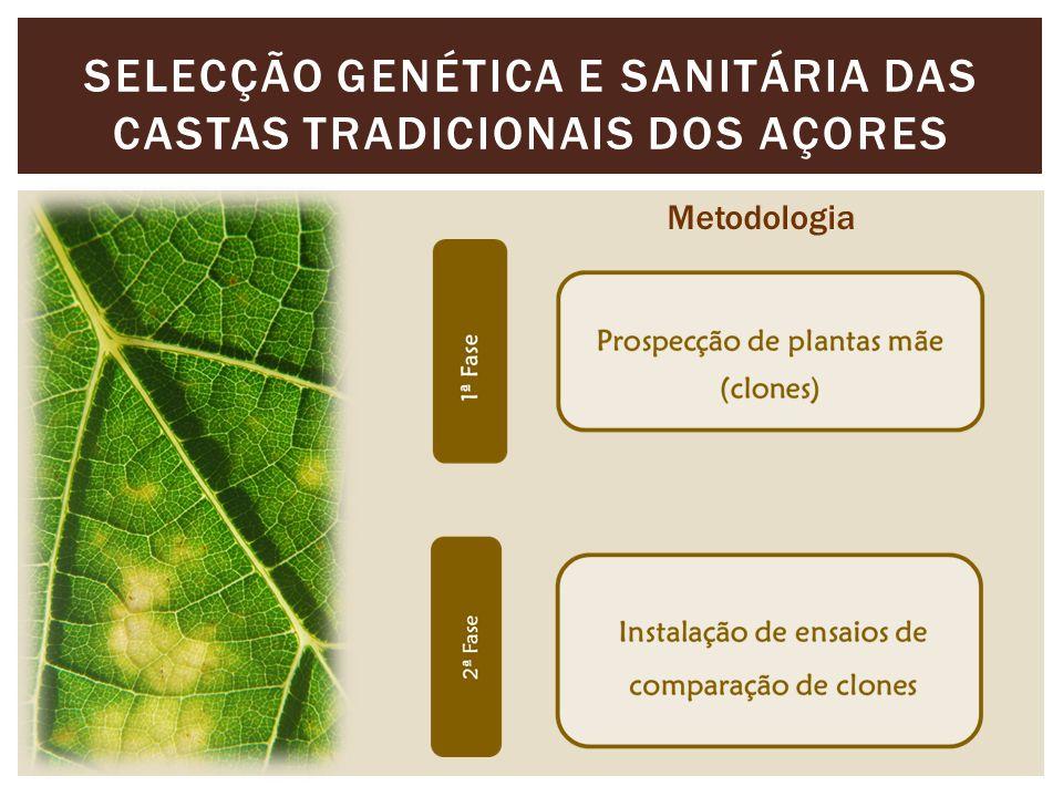 Selecção genética e sanitária das castas tradicionais dos açores