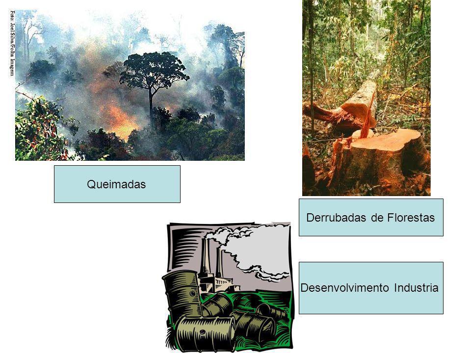 Derrubadas de Florestas