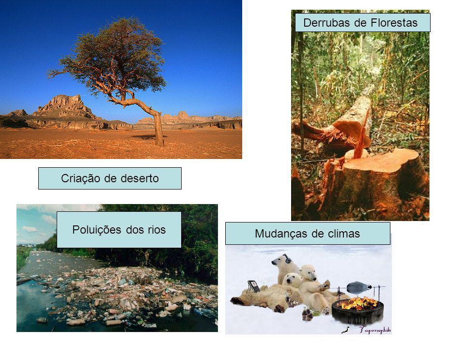 Derrubas de Florestas Criação de deserto Poluições dos rios Mudanças de climas