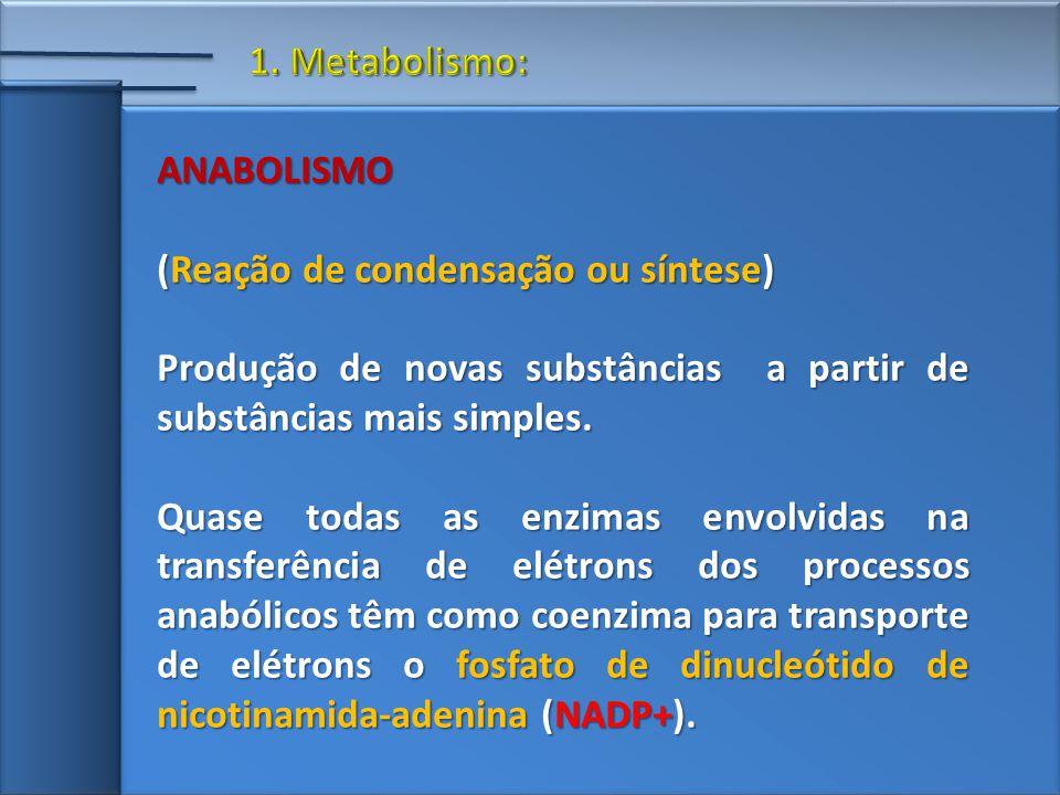 1. Metabolismo: ANABOLISMO. (Reação de condensação ou síntese) Produção de novas substâncias a partir de substâncias mais simples.