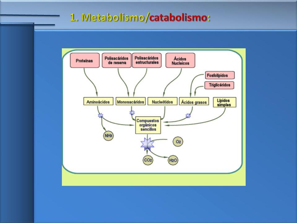1. Metabolismo/catabolismo: