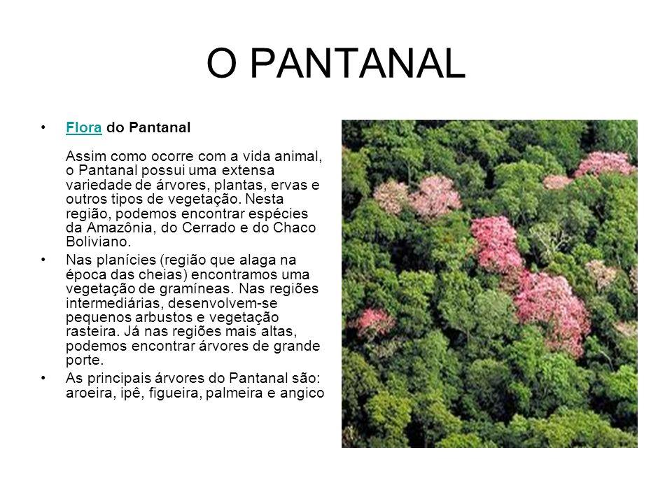 O PANTANAL