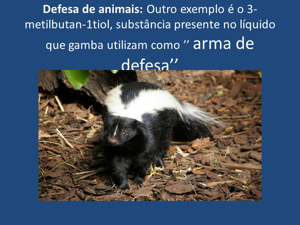 Defesa de animais: Outro exemplo é o 3-metilbutan-1tiol, substância presente no líquido que gamba utilizam como '' arma de defesa''