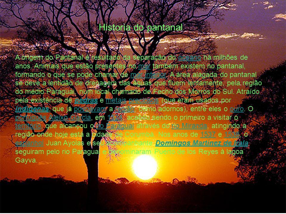 Historia do pantanal