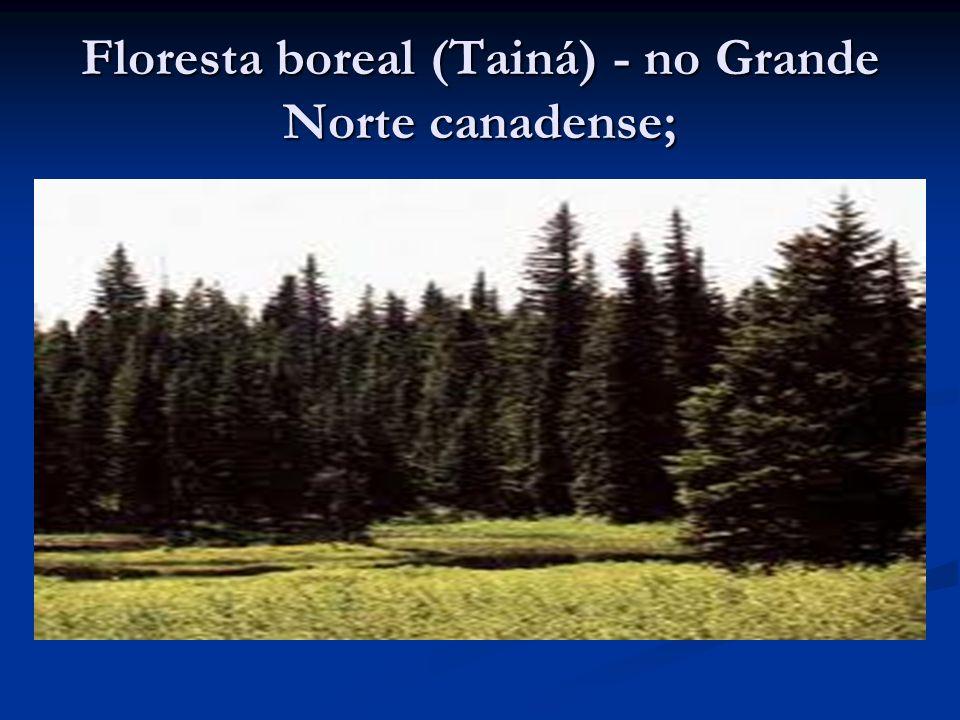 Floresta boreal (Tainá) - no Grande Norte canadense;