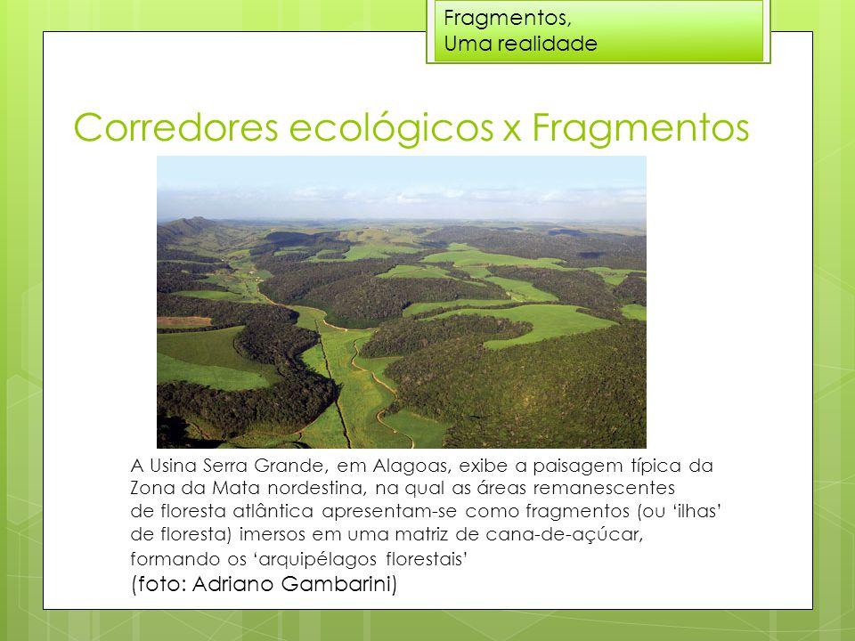 Corredores ecológicos x Fragmentos