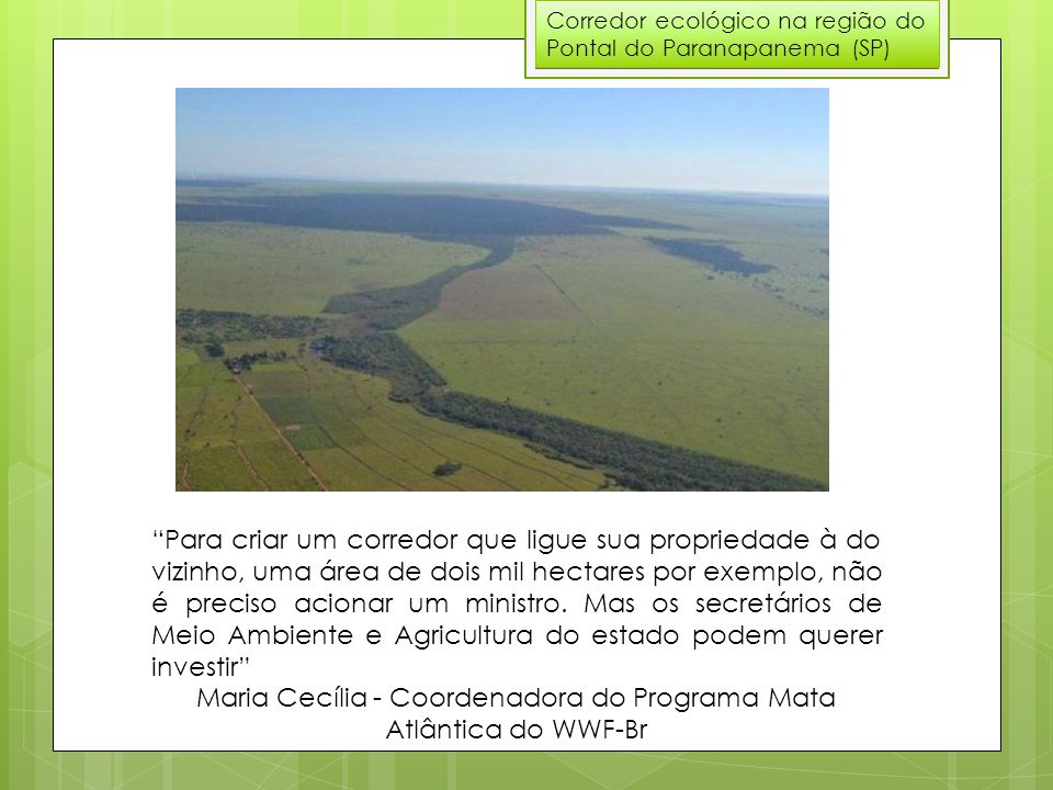 Maria Cecília - Coordenadora do Programa Mata Atlântica do WWF-Br