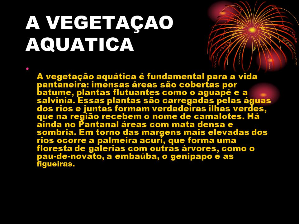 A VEGETAÇAO AQUATICA