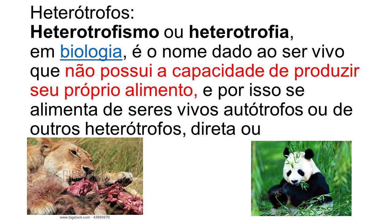 Heterótrofos: Heterotrofismo ou heterotrofia, em biologia, é o nome dado ao ser vivo que não possui a capacidade de produzir seu próprio alimento, e por isso se alimenta de seres vivos autótrofos ou de outros heterótrofos, direta ou indiretamente.