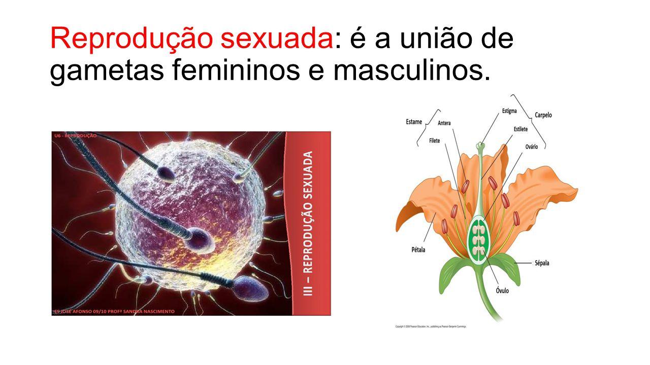 Reprodução sexuada: é a união de gametas femininos e masculinos.