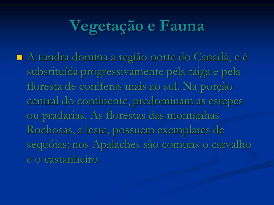 Vegetação e Fauna