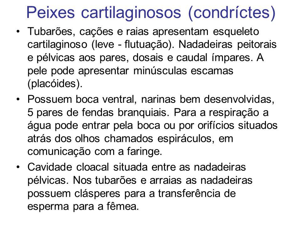 Peixes cartilaginosos (condríctes)