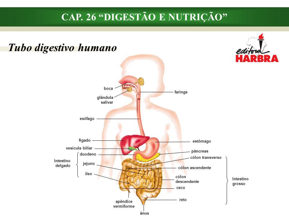 CAP. 26 DIGESTÃO E NUTRIÇÃO