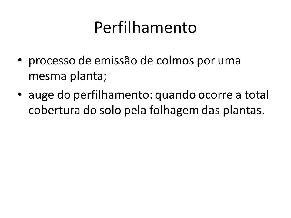 Perfilhamento processo de emissão de colmos por uma mesma planta;