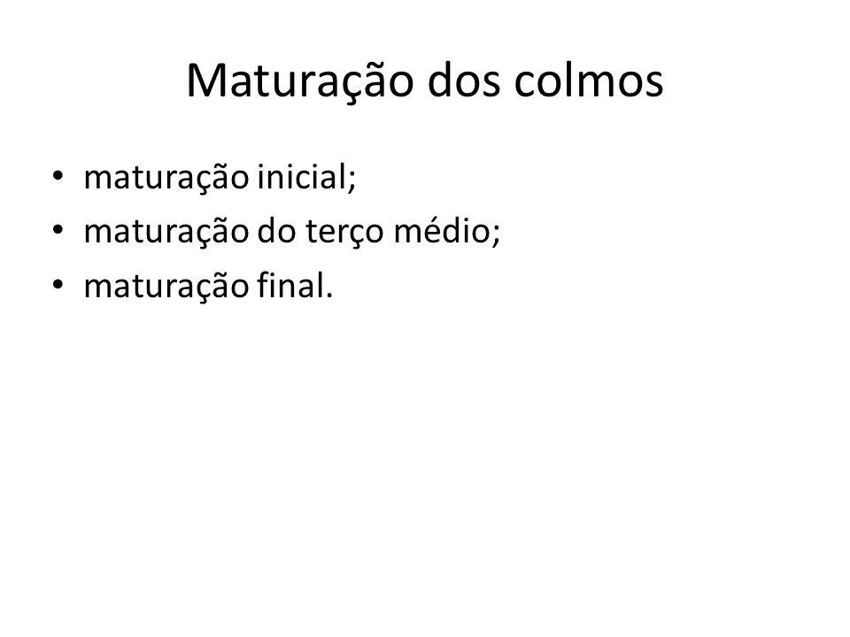 Maturação dos colmos maturação inicial; maturação do terço médio;