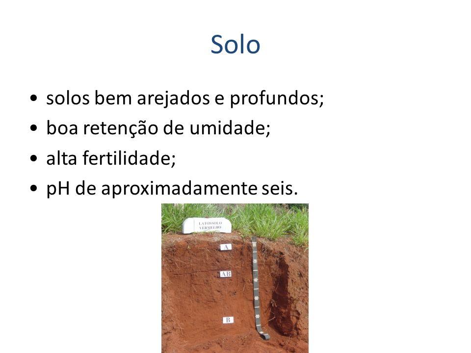Solo solos bem arejados e profundos; boa retenção de umidade;