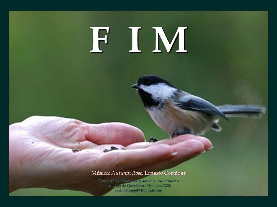 F I M Música: Autumn Rose, Ernesto Cortázar