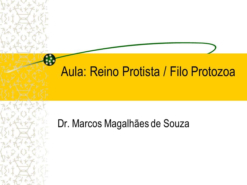 Aula: Reino Protista / Filo Protozoa