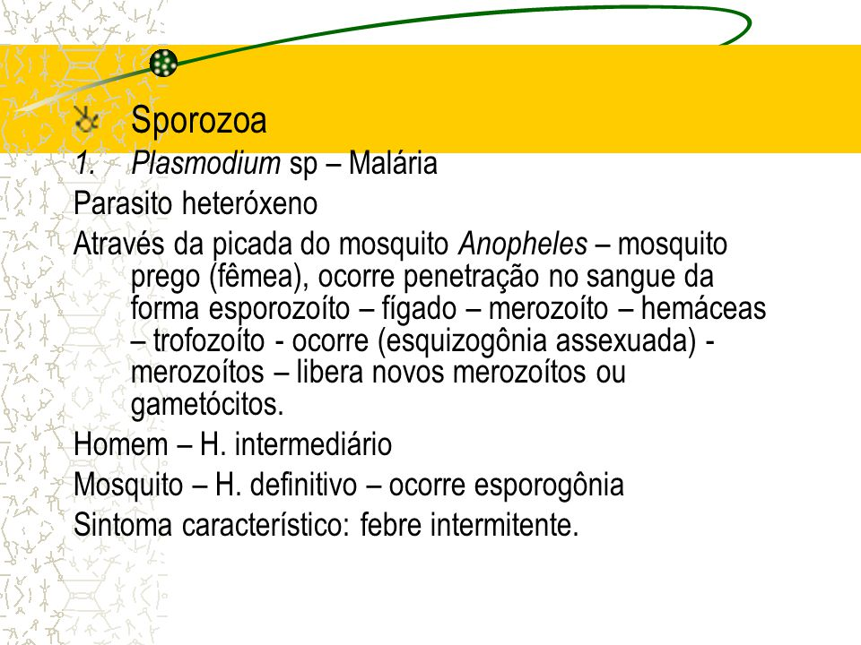 Sporozoa Plasmodium sp – Malária Parasito heteróxeno
